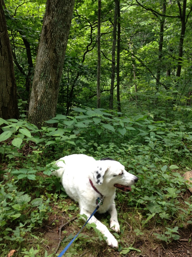 Daisy on the Trail