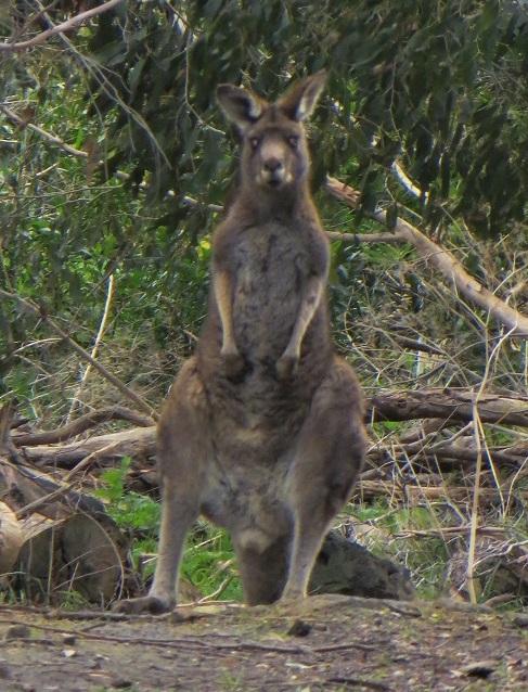 Australia 094