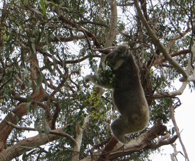 Australia 183